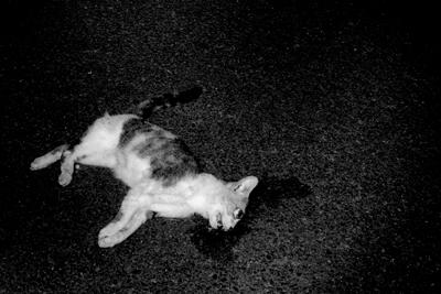 dead cat starlite